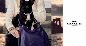 "Lady Gaga's furry friend Miss Asia Kinney launches ""Coach Pups"" campaign‏"